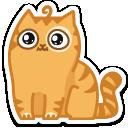 {cat9}
